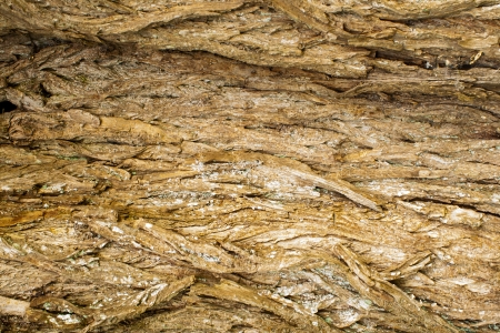 rough surface bark of willow photo