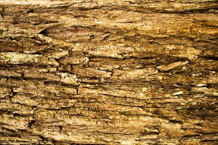 rough surface bark of willow Stock Photo - 20671441