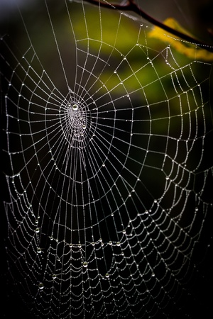 frightening: pretty scary frightening spider web for halloween Stock Photo