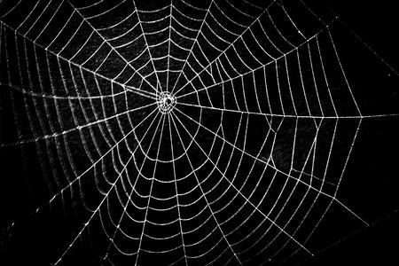 ハロウィーンのためかなり怖い恐ろしいクモの巣 写真素材