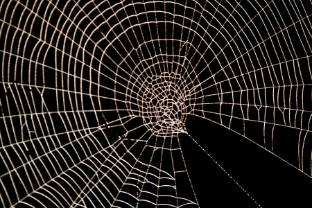 ハロウィーン恐ろしいクモの巣スパイダー web パターン 写真素材