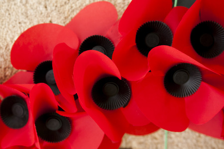 Poppy day great remembrance war world flanders  Stok Fotoğraf