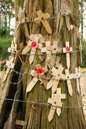 Poppies at a tree with barbed wire flanders fields photo
