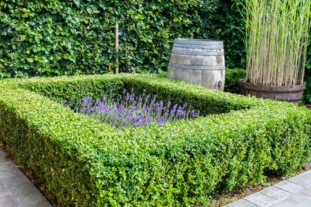 boxwood: beautiful garden with evergreen boxwood plants Stock Photo