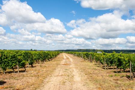 landscape of vineyards in the Loire Valley France Stok Fotoğraf