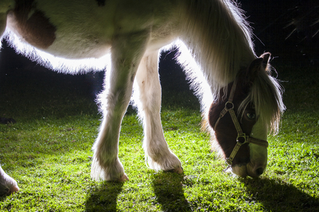 the backlighting: details of horses with backlighting in the meadow
