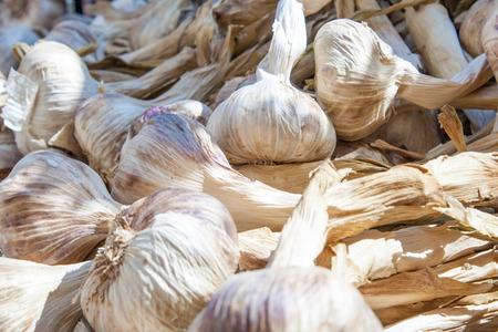 fresh grown garlic spice market in France