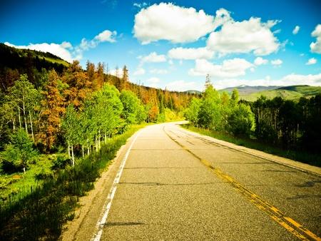 Un camino hermoso y soleado entre los árboles con hojas de colores.