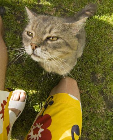 Cat looking at master photo