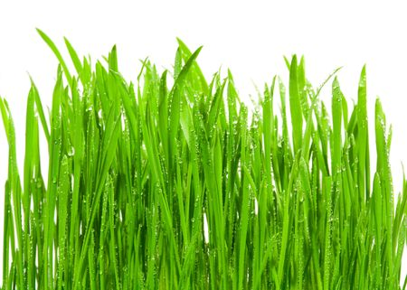 Fresh grass with dew drops isolated on white photo