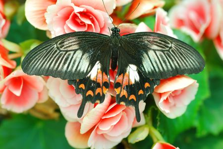 Butterfly on flower close up Stock Photo - 959295