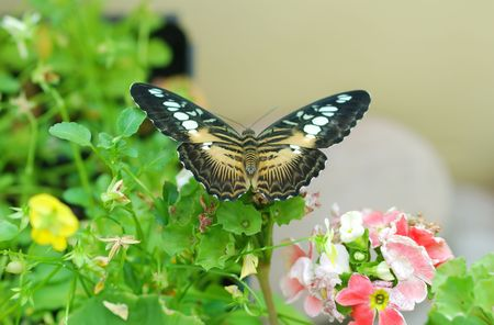 Butterfly on leaf close up Stock Photo - 959297