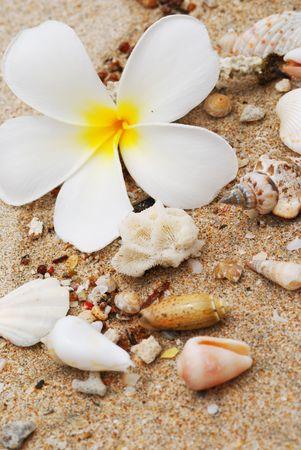 Shells in the beach sand photo