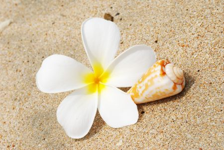Shell & flower on a beach sand photo