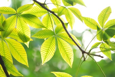 Green leaves background in sunlight