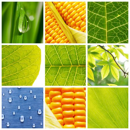 Collage made of different nature backgrounds Stock Photo - 4935833