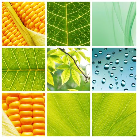 Collage made of different nature backgrounds Stock Photo - 5233962