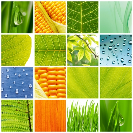 Collage made of different nature backgrounds Stock Photo - 5502910