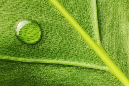 leaf close up: Beautiful water drop on a leaf close-up Stock Photo