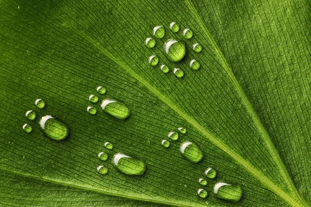 Beautiful water footprint drops on a leaf close-up photo