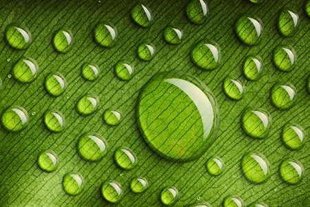 Beautiful water drops on a leaf close-up photo