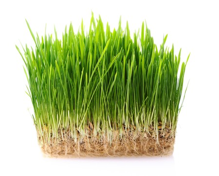 Green grass in soil isolated on white background Stock Photo - 7123165