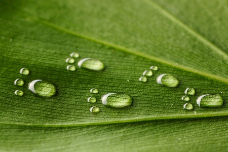 footmark: Beautiful water footprint drops on a leaf close-up Stock Photo
