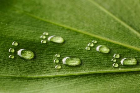 footprint: Huella de agua bella gotas en un primer plano de hoja  Foto de archivo