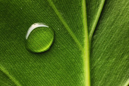 Beautiful water drop on a leaf close-up photo