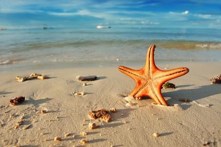 sol radiante: Estrella de mar en una hermosa playa