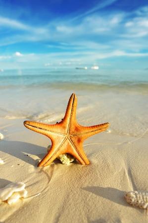 Starfish on a beautiful beach photo