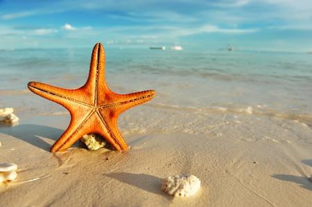 fish star: Estrella de mar en una hermosa playa