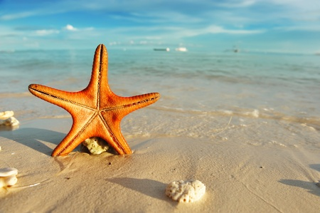 sea stars: Starfish on a beautiful beach