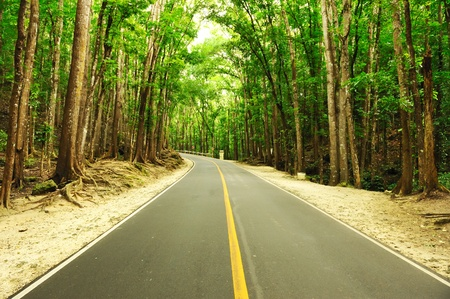 forest road: Road running through tropical rainforest Stock Photo