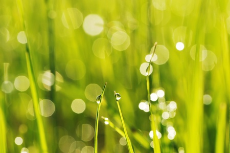 Morning grass with dew drops photo