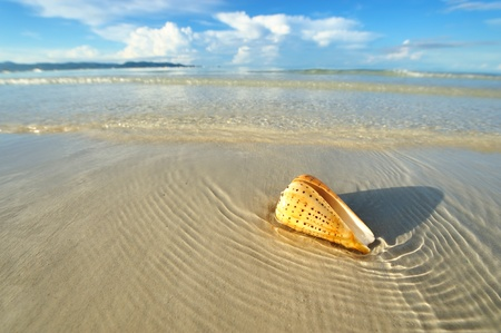 low tide: Shell on a beach at low tide Stock Photo