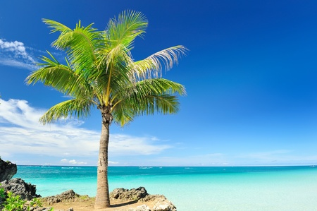 virgin islands: Beautiful palm tree at remote island, Philippines Stock Photo