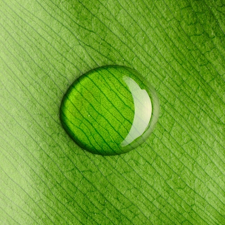 water droplet: Beautiful water drop on a leaf close-up Stock Photo