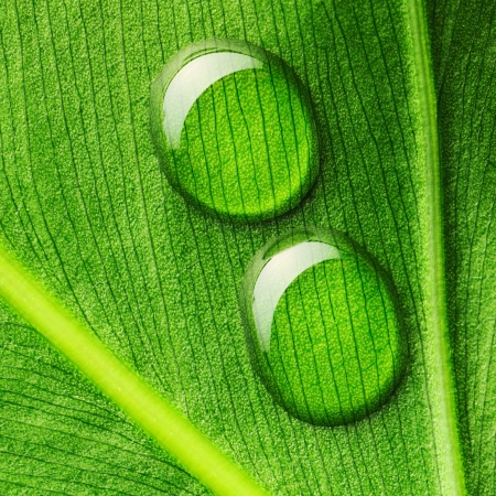 Beautiful water drops on a leaf close-up Stock Photo - 14133299