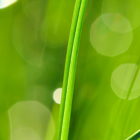 Morning grass with dew drops Stock Photo - 14133221