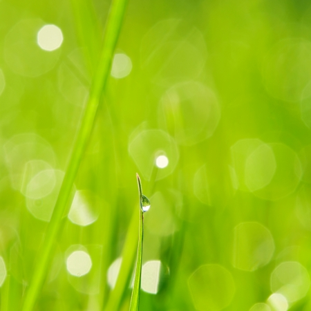 Morning grass with dew drops Stock Photo
