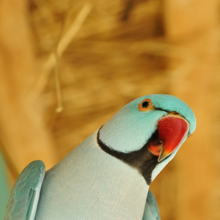 Beautiful parrot bird close up Stock Photo - 15829548