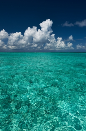 maldivian: Crystal clear turquoise water at tropical maldivian beach