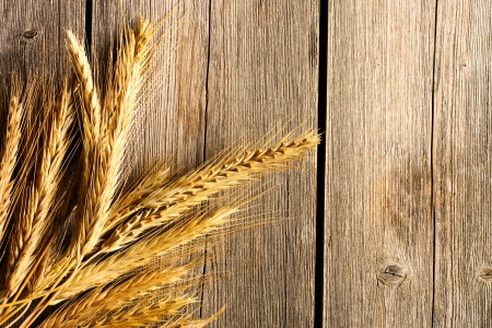 spikelets: Rye spikelets on wooden background