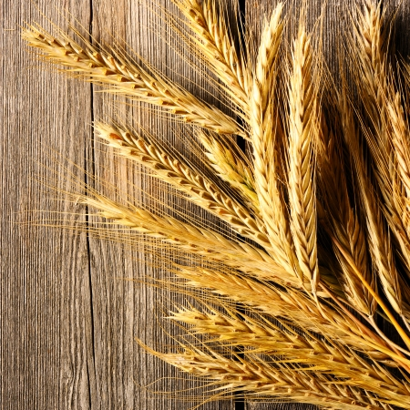 Rye spikelets on wooden background photo