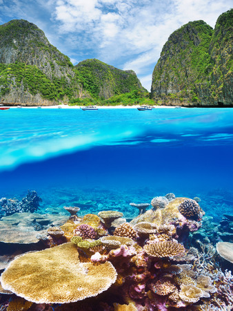 Beautiful lagoon with coral reef bottom underwater and above water split view photo