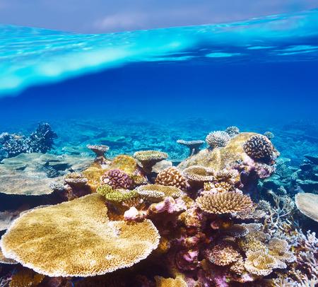 Coral reef at South Ari Atoll, Maldives Stock Photo - 26611973