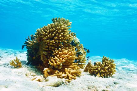 deep south: Coral reef at South Ari Atoll, Maldives Stock Photo