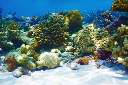 Coral reef at South Ari Atoll, Maldives Stock Photo - 26770641