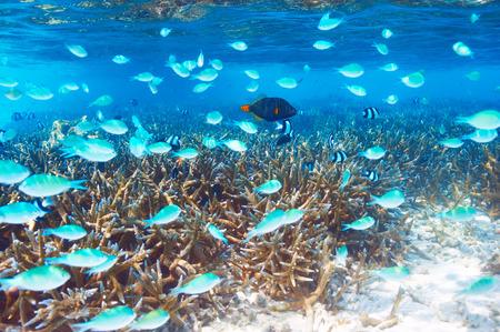 Coral reef at South Ari Atoll, Maldives Stock Photo - 26770643